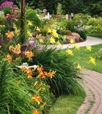 Лилейники в дизайне - Декоративные кустарники в ландшафтном